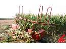 Máy thu hoạch thân ngô 2 hàng