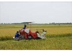 Máy gặt lúa liên hợp VNAGR-GDLH1300