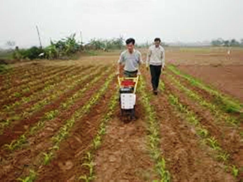 Máy tra hạt, xới cỏ và bón phân 3WG-5 hinh anh 1