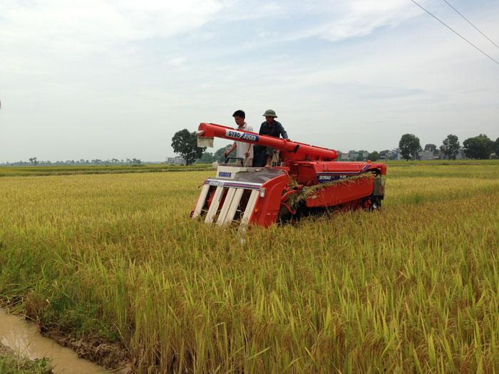 Máy gặt đập liên hợp Kubota R1-55 hinh anh 1