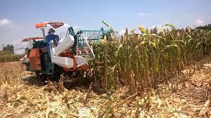 Máy gặt đập Kubota CK60/CK68/CK70/CK95 hinh anh 3
