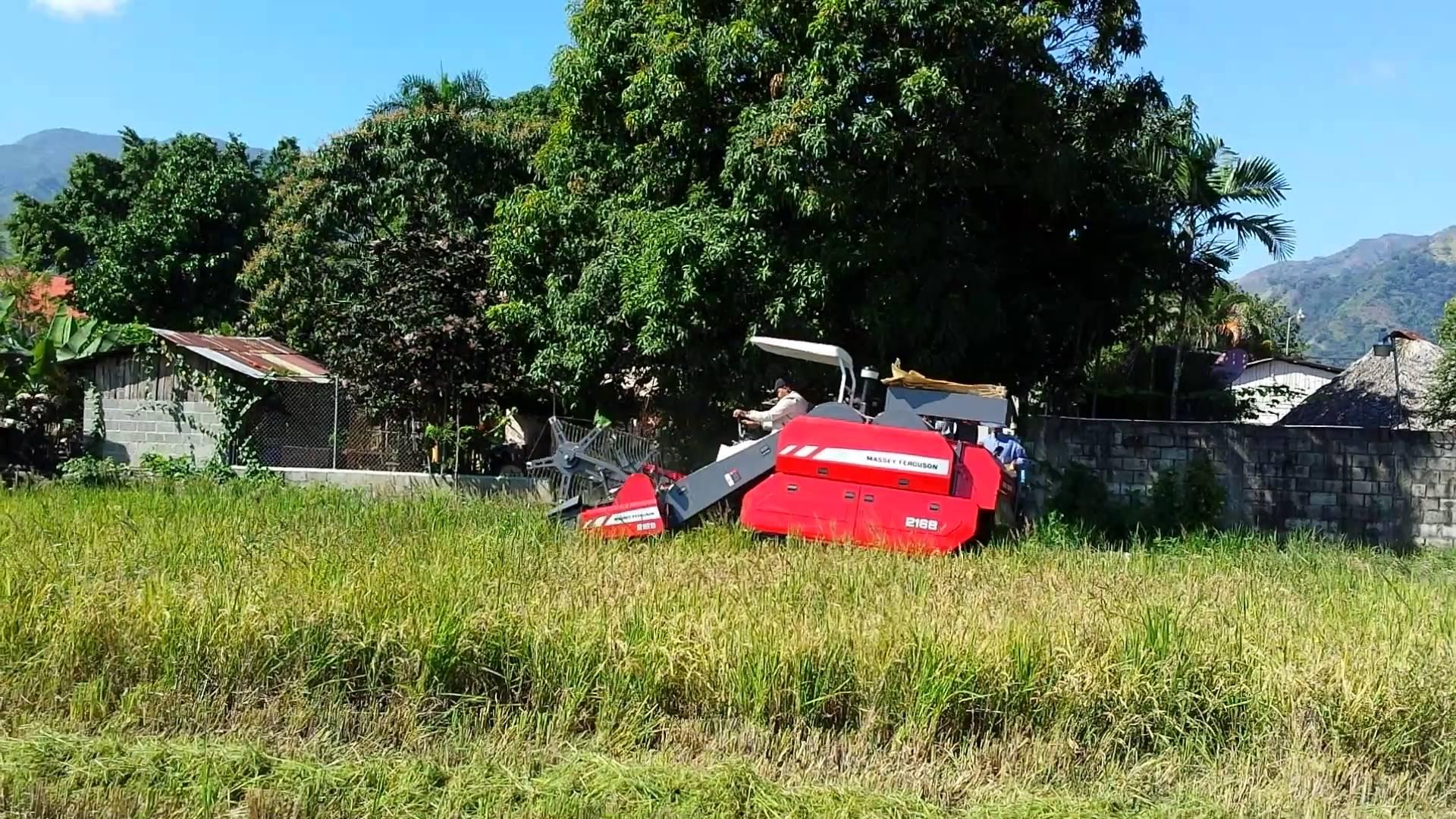 Máy gặt đập liên hợp Massey Ferguson MF2168  hinh anh 3