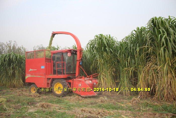 Máy cắt cỏ voi chuyên dụng OKASU hinh anh 4