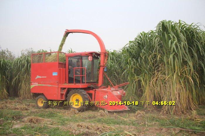 Máy cắt cỏ voi chuyên dụng OKASU hinh anh 5