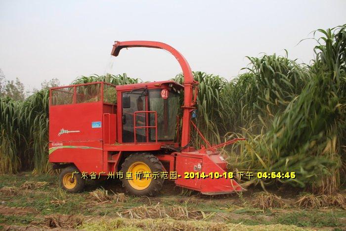 Máy cắt cỏ voi chuyên dụng OKASU hinh anh 6