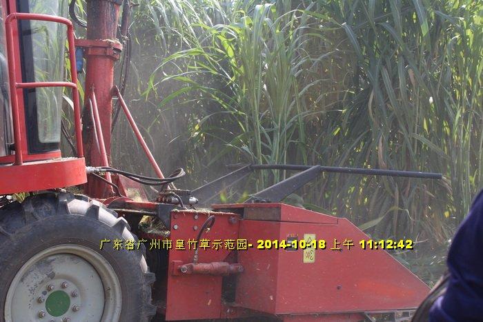 Máy cắt cỏ voi chuyên dụng OKASU hinh anh 8
