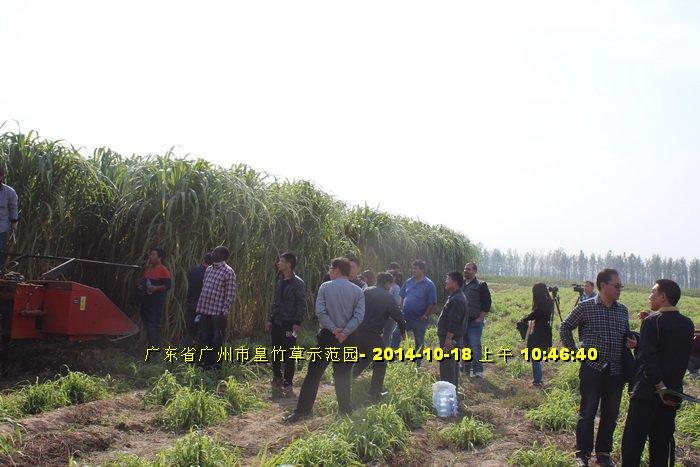 Máy cắt cỏ voi chuyên dụng OKASU hinh anh 10
