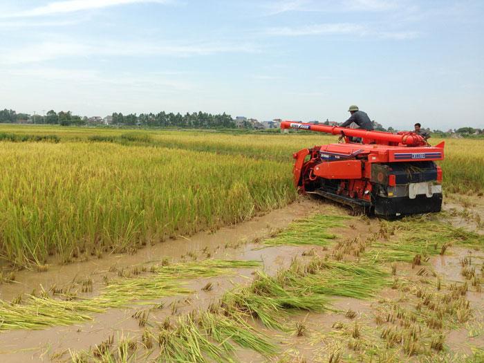 Máy gặt đập liên hợp Kubota R1-55 hinh anh 3